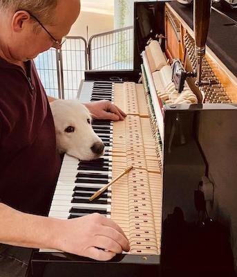 Hond legt hoofd op toetsen tijdens het pianostemmen.